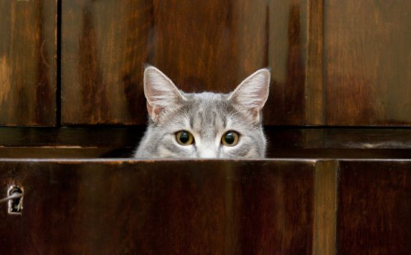 How To Get Cat Urine Smell Out Of Wood Pets Pinterest