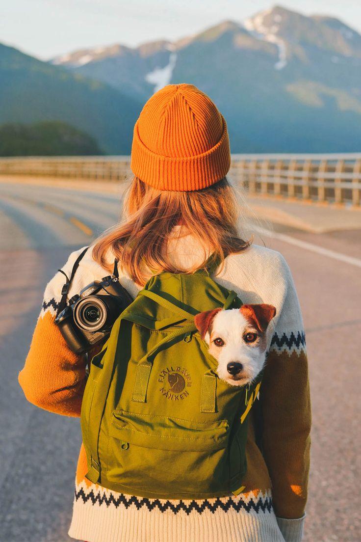 best wanderlust puppy pals images on pinterest