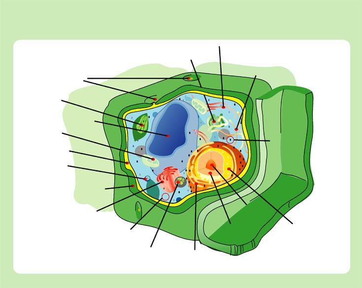 Struktura komórki roślinnej: Wizualny przewodnik - Structure of a Plant Cell: A Visual Guide