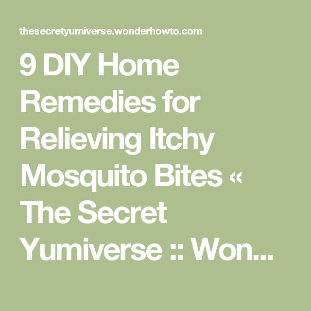 9 DIY Home Remedies for Relieving Itchy Mosquito Bites « The Secret Yumiverse :: WonderHowTo