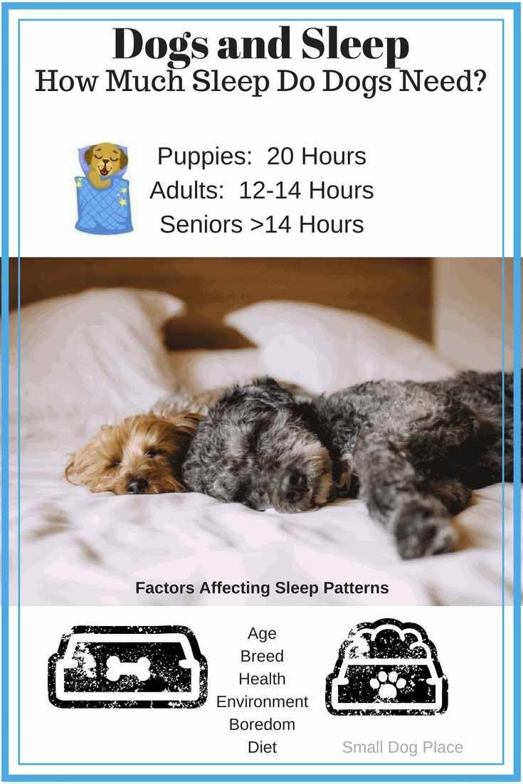 Dogs And Sleep How Much Sleep Do Dogs Need Each Day Sleeping