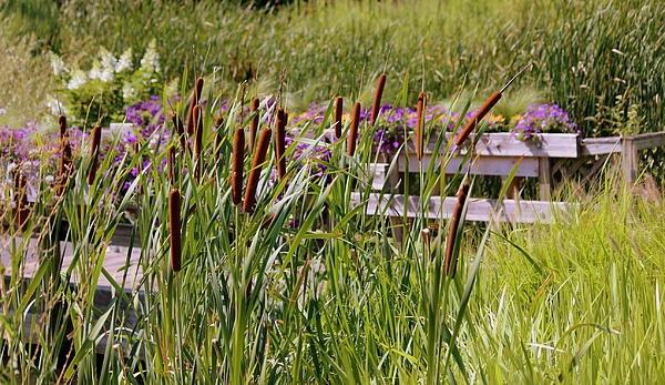Cattails By The Bridge by Rosanne Jordan Park landscape