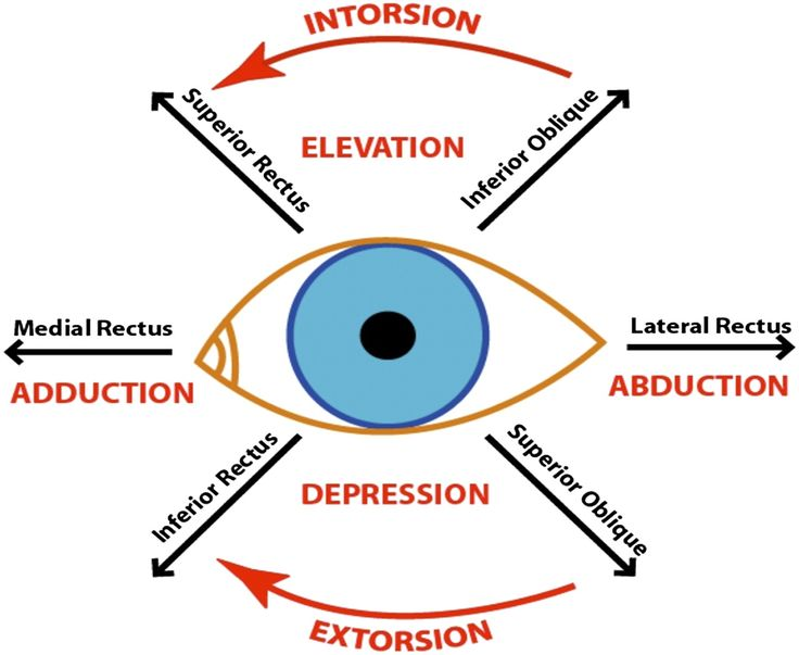 Eye orbit anatomy