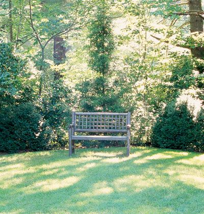 Made in the Shade    Create visual breathing space in your garden with a wooden bench set under shady trees where it's always cool.