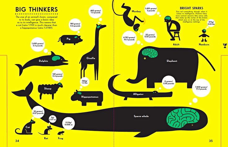 Infographics for children: what they can learn from data ...