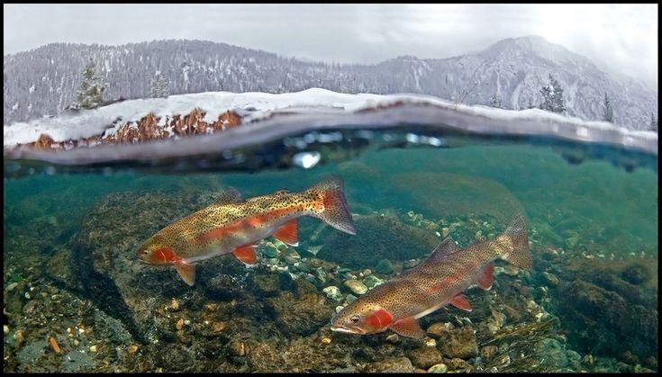 17 Beste Afbeeldingen Over Foto 39 S Op Pinterest Montana