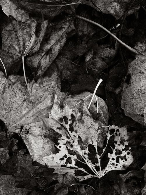 laurajwryan:    Autumn Litter, 11/3/2012