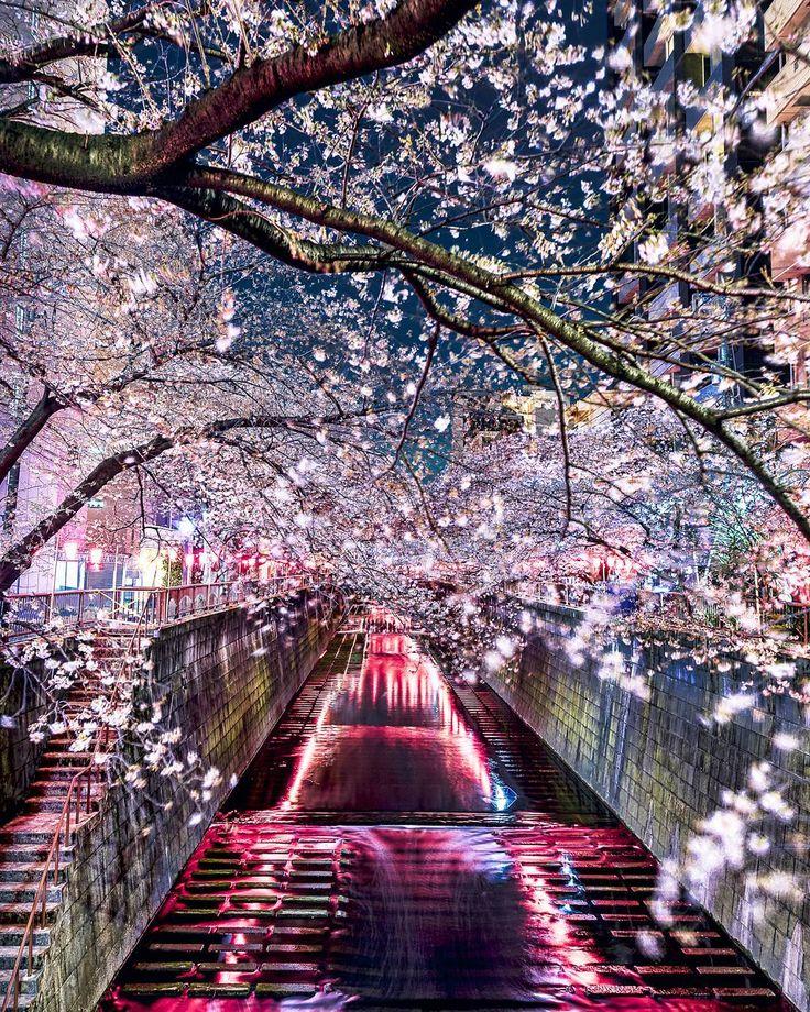 "8,659 Likes, 277 Comments - Takashi Komatsubara  (@takashi_komatsubara) on Instagram: """"Cherry Blossoms over the Meguro River"" :  毎年葛藤しつつも、人混みの煩わしさに負けて、 都内の桜名所にはあまり行った事がありませんでしたが、…"""