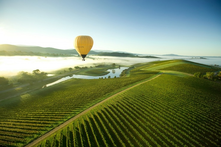 High above the wonderful Yarra Valley #YarraValleyFoodandWineFestival #food