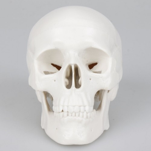 """4"""" Small Replica Human Sugar Skull Craft Skeleton Head Moving Jaw Goth Statue 