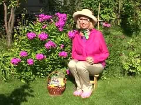 Флоксы. Мои любимые цветы. Октябрина Ганичкина - YouTube — Яндекс.Видео