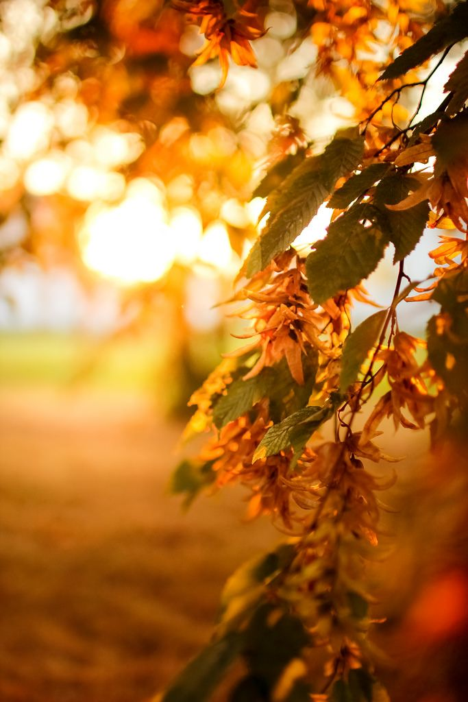 A tree branch basks in the beautiful golden autumn sun