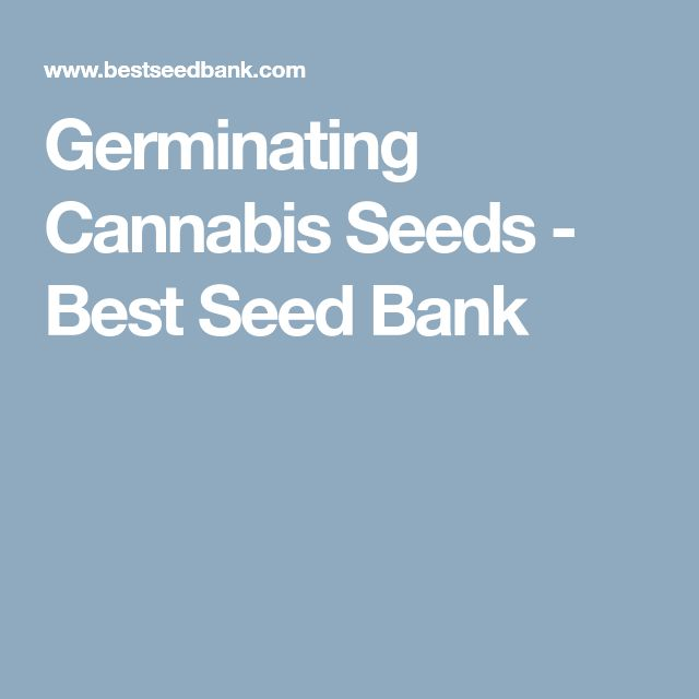 Germinating Cannabis Seeds - Best Seed Bank
