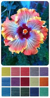 ColourSpun: ColourSpun Colourways - Hibiscus Flower