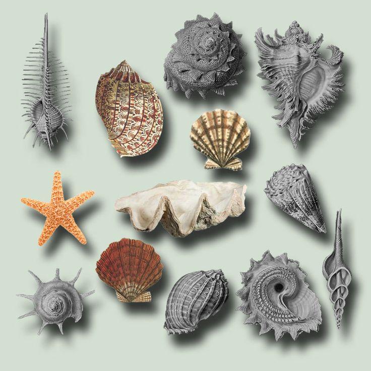 Seashells Pack psd by ravenarcana