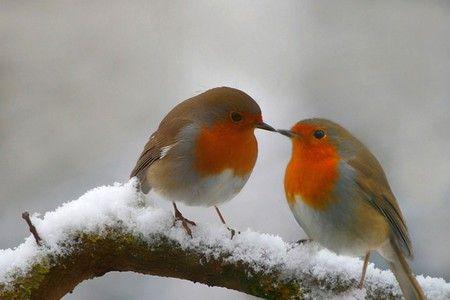birds kissing.
