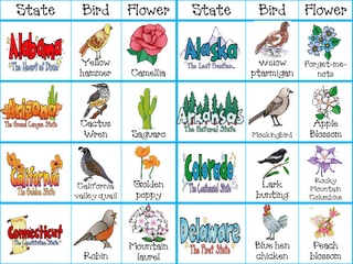 United States Cards: state, flower, and birds