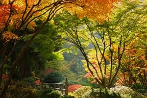 Japanese Garden.  Autumn colors in Portland's Japanese Garden, perhaps one of the most authentic outside of Japan.