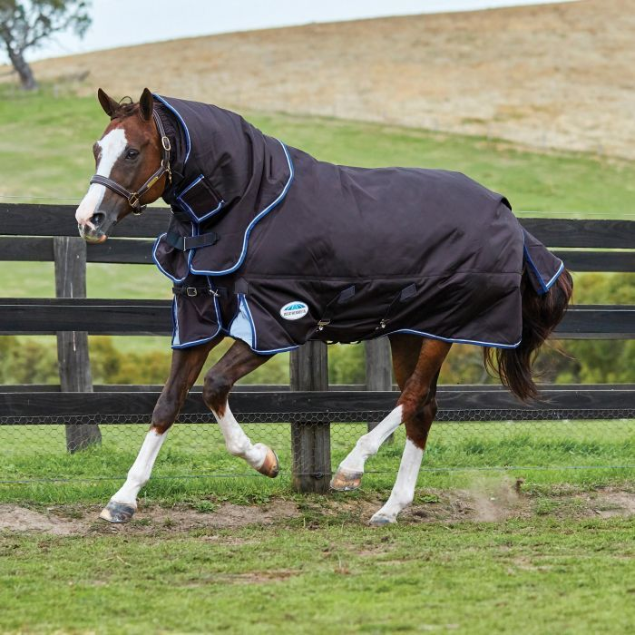 Horses Horse Rugs