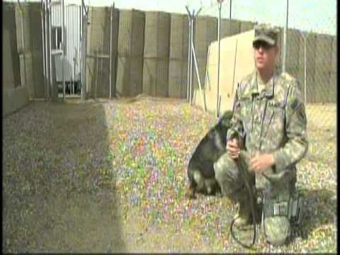 MPs and Military Working Dogs, Part 2