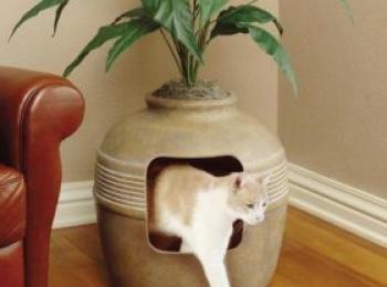 Een kat manieren bijbrengen. Beloon hem bij goed gedrag met bijvoorbeeld gistsnoepjes. Als de kat iets stouts doet geef je hem een standje.