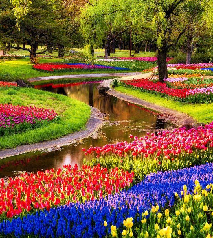 Keukenhof tulips Netherlands