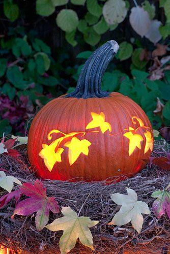 Pumpkin carved with floral pattern - © Elke Borkowski/GAP Photos