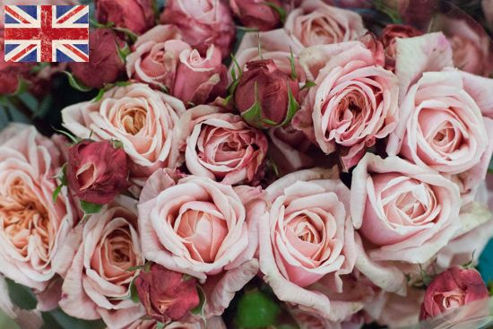 British pink Romantic Antike roses at New Covent Garden Flower Market - October 2015