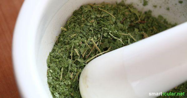 Birkenblätter als Salz-Ersatz für eine salzreduzierte Ernährung