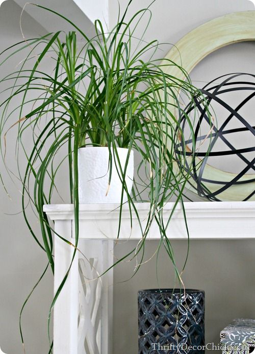 Plants that are easy to keep alive and are safe to have with cats! #catlover #houseplants