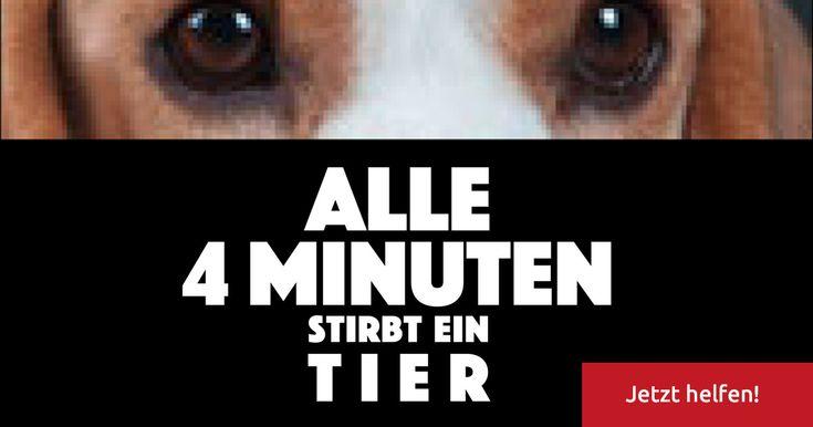 Tierversuche ohne uns jetzt helfen.Email Aktion.Bitte mitmachen und teilen,Danke.