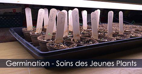 Soins des plants de #tomates - #Semis intérieurs. Instructions : http://www.jardinage-quebec.com/guide/semis-de-tomates/graines-tomates-6.html