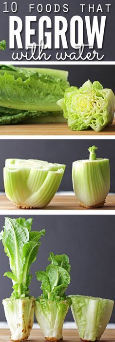 10 Foods that Regrow in Water Alone without Dirt - Save space and money! Regrow lettuce, celery and all kinds of  vegetables. Easy enough for anyone to do!