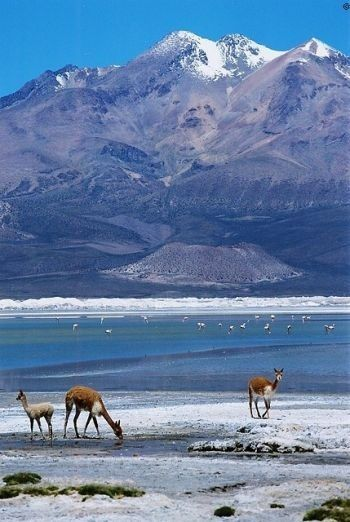 Lauca National Park, Chile. The park is in Chile's far north, in the Andean range. It encompasses an area of 1,379 km² of altiplano and mountains, the latter consisting mainly of enormous volcanoes.