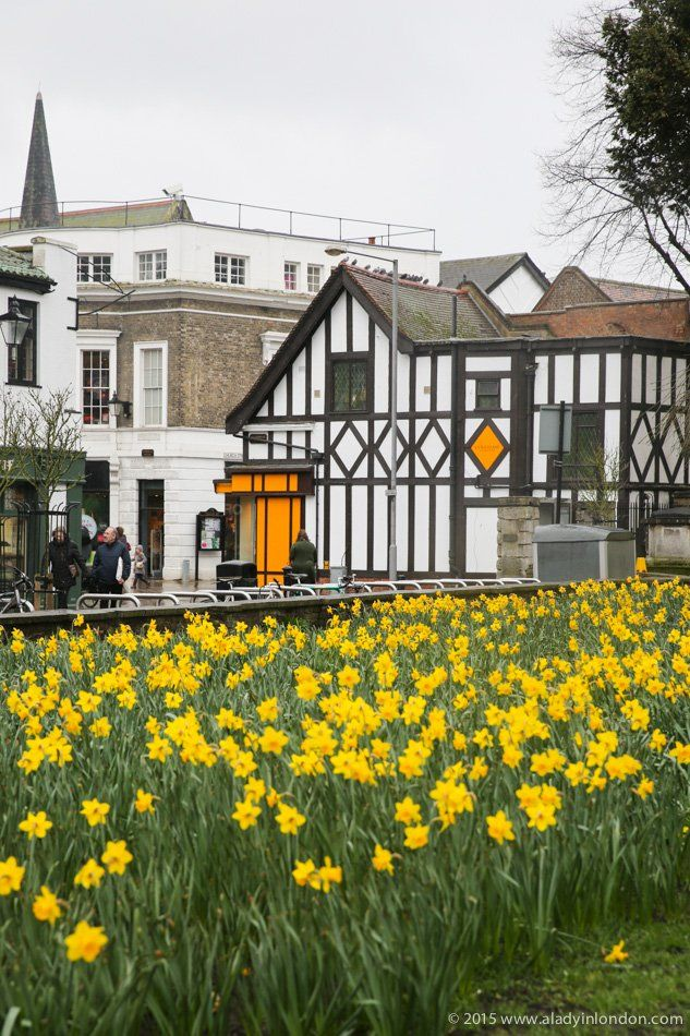 Daffodils in Kingston upon Thames via @ladyinlondon pinned to Yellow @pinterest board