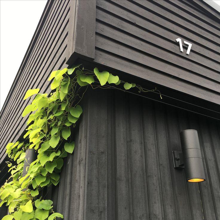 Pipe vine climbing my garage
