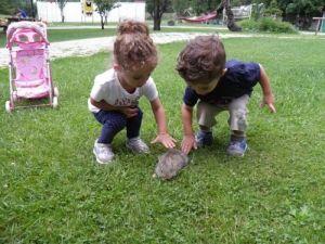 κουνελάκια,αγροτουριστική Φάρμα, Φάρμα ζώων, Ράντζο πόνυ