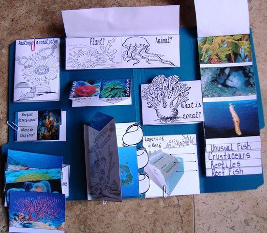 Coral Reef - Tina's Dynamic Homeschool Plus