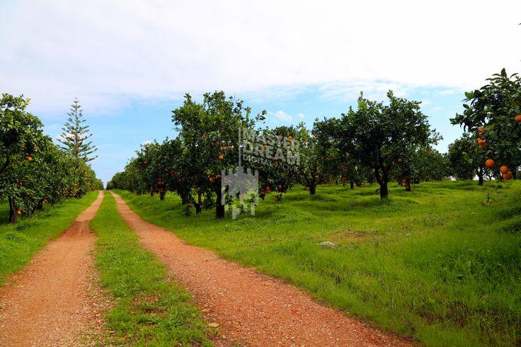 Independentemente do caminho escolhido, irá encontrar sempre cenários de grande beleza no Algarve./ Whichever way you choose, you will always find beautiful sets in Algarve.