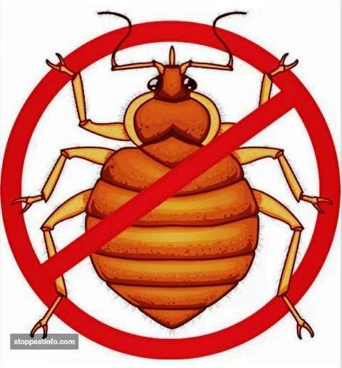 The 25 best bed bug trap ideas on pinterest bed bug spray bed how to get rid of bed bugs fast 8 best bed bug traps sprays and dusts ccuart Choice Image