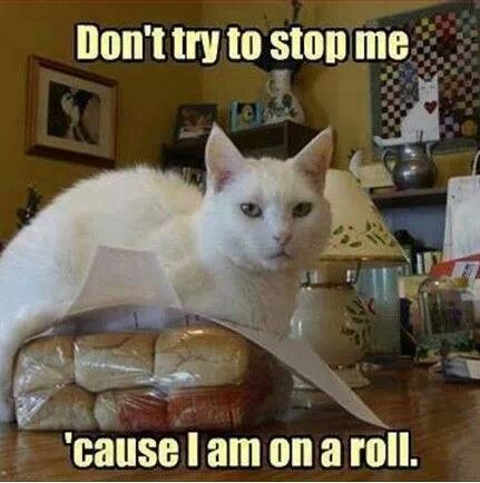 130 Best Images About Funny Cat Pictures On Pinterest