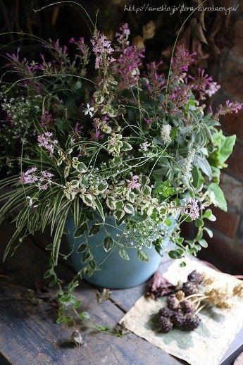 ピンクのアガスターシェ寄せ植え |フローラのガーデニング・園芸作業日記