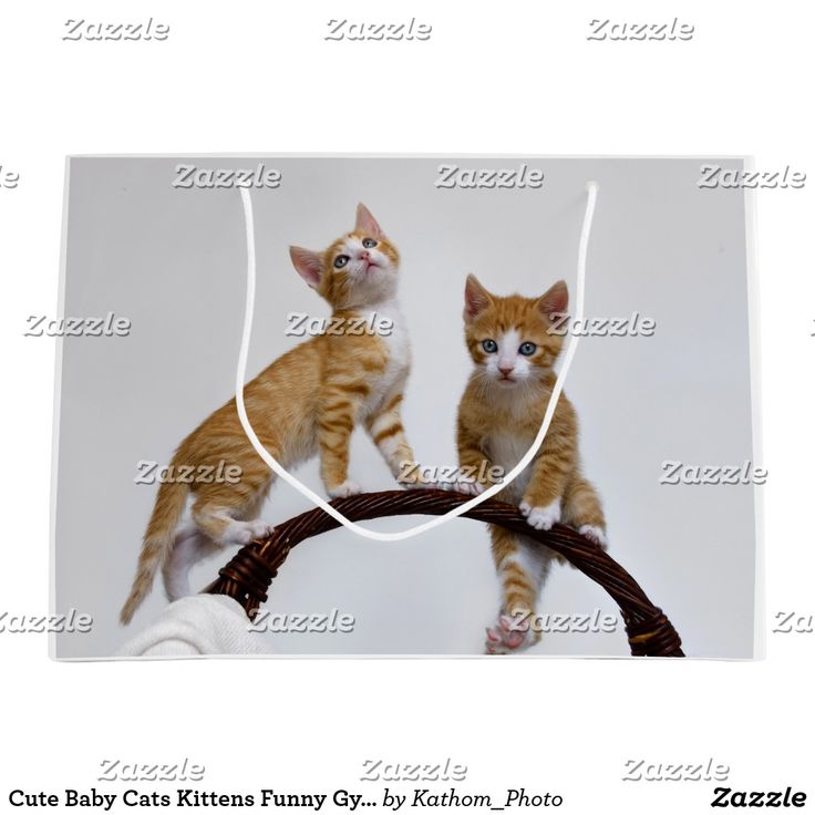 Cute Baby Cats Kittens Funny Gym Photo Wrapbag