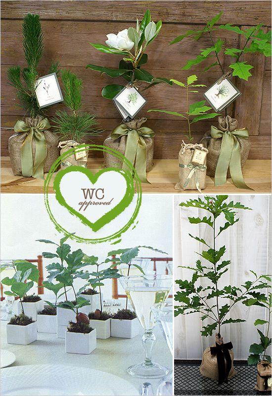 decoration: Treeweddingfavors Jpg 550 800, Tree Wedding, Wedding Favors, Time, Dream, Wedding Ideas, Plants, Trees