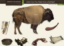 The northern Plains Indians used every part of the buffalo. In this interactive matching game, students will match objects made by Native Americans from the body parts of buffalo to the appropriate part of the buffalo's anatomy. It is interactive whiteboard and iPad friendly and is included in the website Tracking the Buffalo: Stories From a Buffalo Hide Painting.