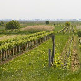 ©Ko Hon Chiu Vincent - Austria - Hungary - State of Burgenland (AT) / County of Györ-Moson-Sopron (HU) - Fertö / Neusiedlersee Cultural Landscape