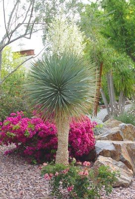 Palm springs guide book