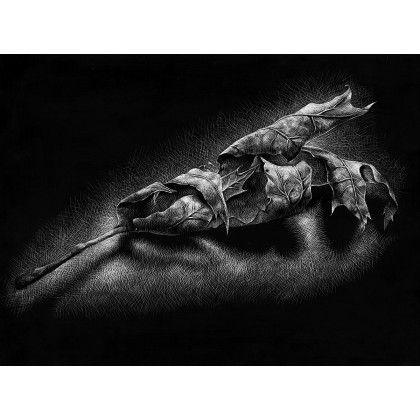Fallen leaf || A study of a fallen oak tree leaf. This sketch is done on a black scratch board.