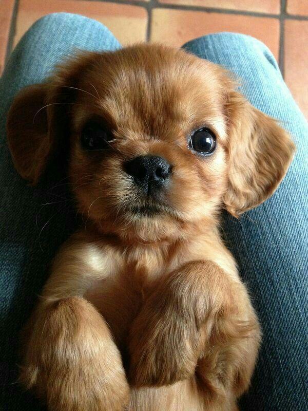 Verliebt in diese Augen! Schönste Bilder von Hunden und Welpen! Wir lieben alle…