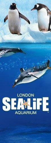 Sea Life London Aquarium #london #mustsee #accorcityguide The nearest Accor hotel : Novotel London Waterloo